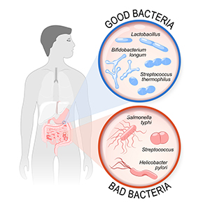 What is your gut flora?