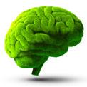 Grafische Darstellung eines grünen Gehirns auf weißem Hintergrund