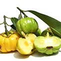 Garcinia Cambogia als Nahrungsergänzung