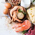 Protein Lebensmittel