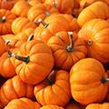 Viele orange Kürbise mit Stiel wild auf einem Haufen