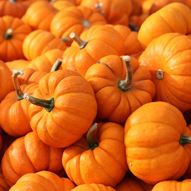5 Zutaten zur saisonalen Entgiftung im Herbst