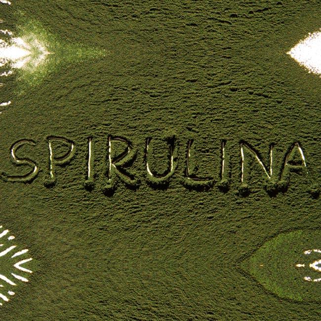 Spirulina und seine beeindruckende Wirkung auf den Körper