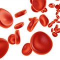 Darstellung roter Blutkörperchen auf weißem Hintergrund