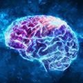 Fördert die Gehirnfunktion