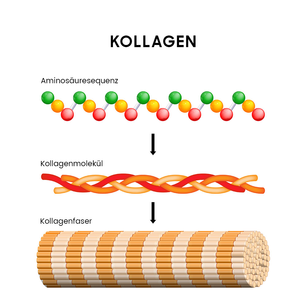 Image explaining what is collagen