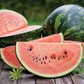 Zwei Melonenspalten auf hölzernem Untergrund mit einer ganzen Melone im Hintergrund